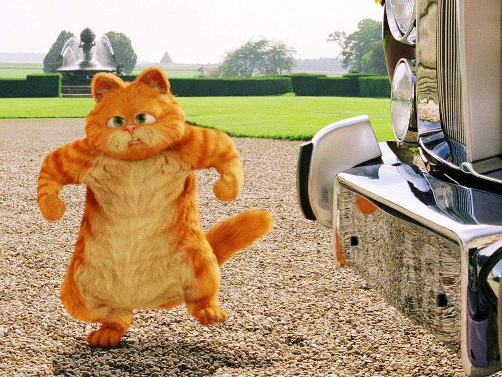 Garfield Angry Wallpaper 1024x768