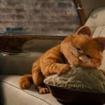 Garfield Hugging Pie Wallpaper